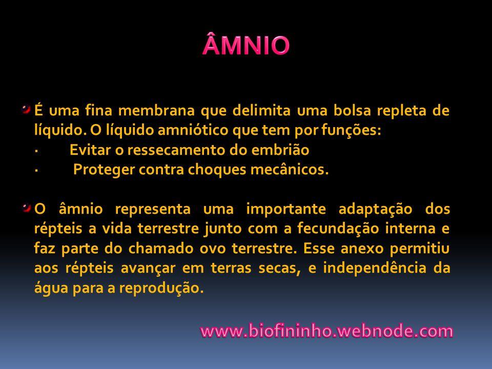 É uma fina membrana que delimita uma bolsa repleta de líquido. O líquido amniótico que tem por funções: · Evitar o ressecamento do embrião · Proteger