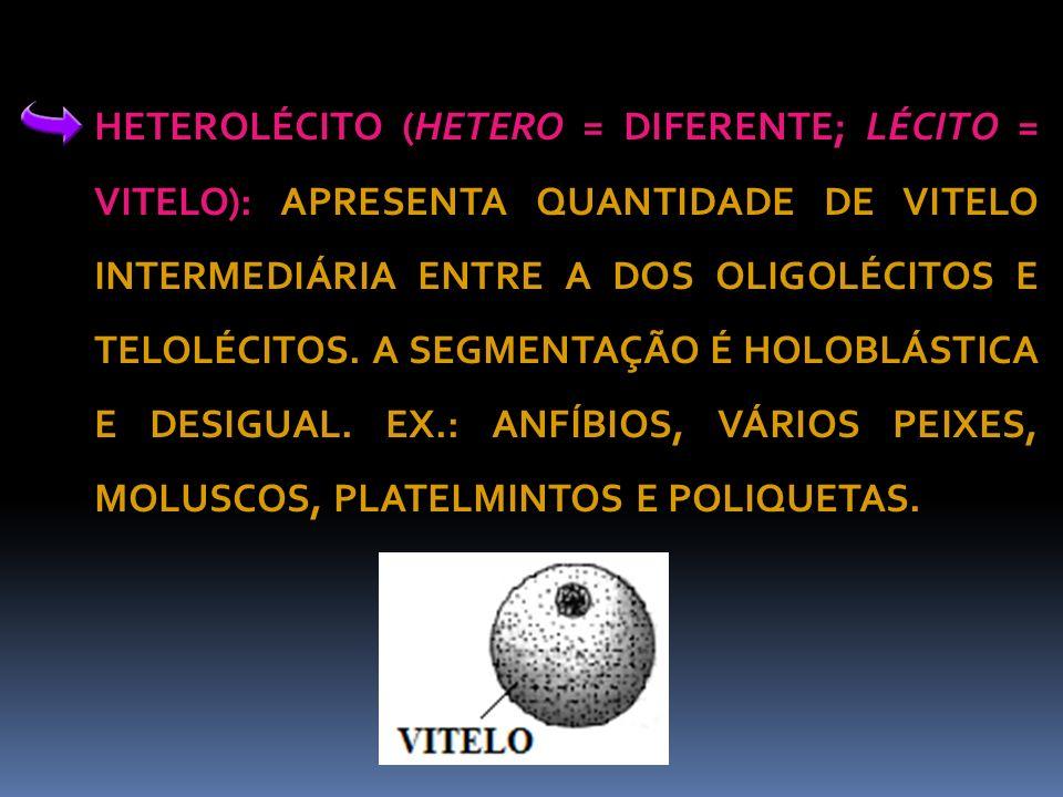 HETEROLÉCITO (HETERO = DIFERENTE; LÉCITO = VITELO): APRESENTA QUANTIDADE DE VITELO INTERMEDIÁRIA ENTRE A DOS OLIGOLÉCITOS E TELOLÉCITOS. A SEGMENTAÇÃO