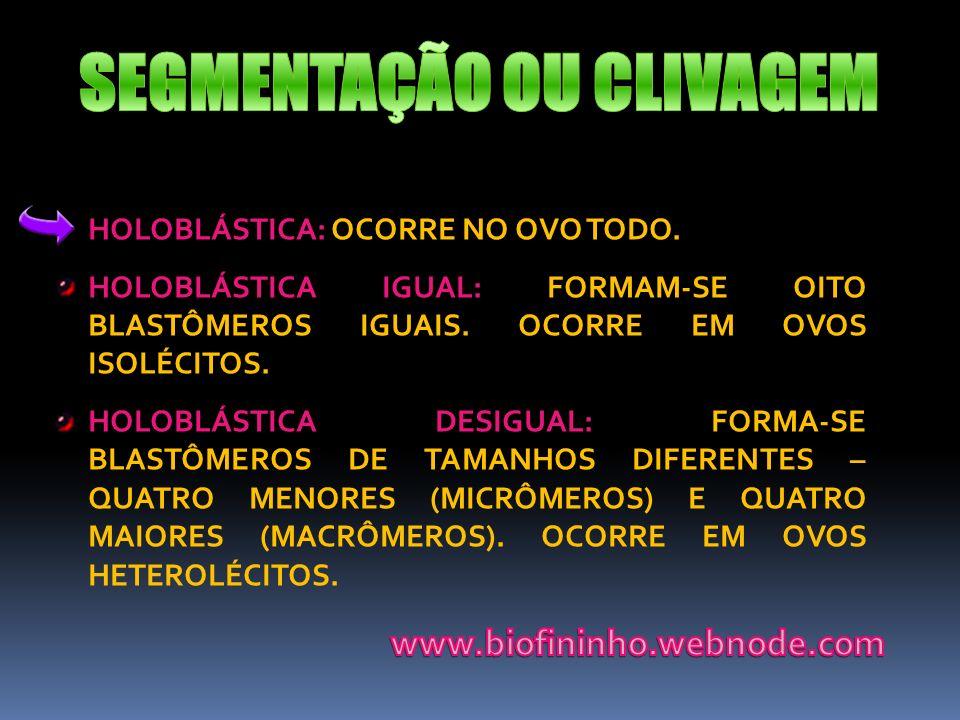 HOLOBLÁSTICA: OCORRE NO OVO TODO. HOLOBLÁSTICA IGUAL: FORMAM-SE OITO BLASTÔMEROS IGUAIS. OCORRE EM OVOS ISOLÉCITOS. HOLOBLÁSTICA DESIGUAL: FORMA-SE BL
