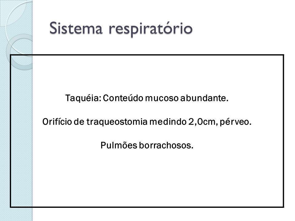 Sistema respiratório Taquéia: Conteúdo mucoso abundante. Orifício de traqueostomia medindo 2,0cm, pérveo. Pulmões borrachosos.