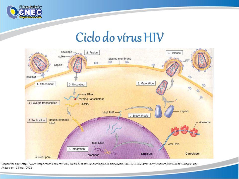 Ciclo do vírus HIV Disponível em:. Acesso em: 18 mar. 2012.