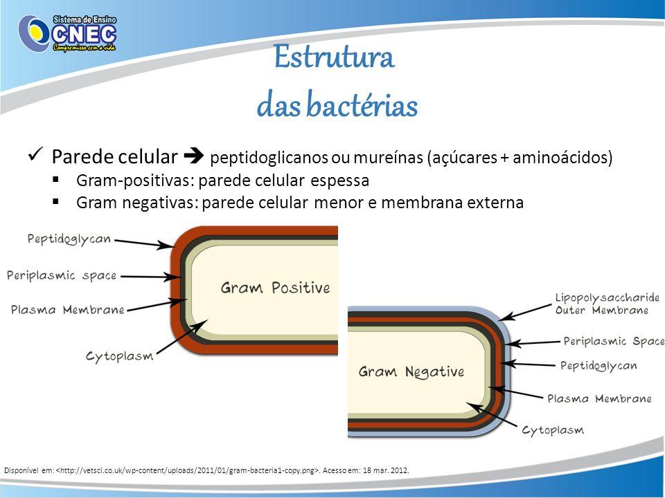 Estrutura das bactérias Disponível em:. Acesso em: 18 mar. 2012. Parede celular peptidoglicanos ou mureínas (açúcares + aminoácidos) Gram-positivas: p