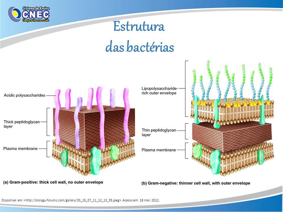 Estrutura das bactérias Disponível em:. Acesso em: 18 mar. 2012.
