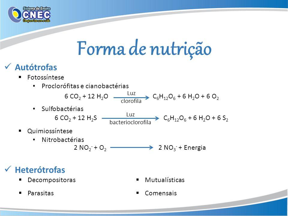 Forma de nutrição 6 CO 2 + 12 H 2 OC 6 H 12 O 6 + 6 H 2 O + 6 O 2 Luz clorofila 6 CO 2 + 12 H 2 SC 6 H 12 O 6 + 6 H 2 O + 6 S 2 Luz bacterioclorofila
