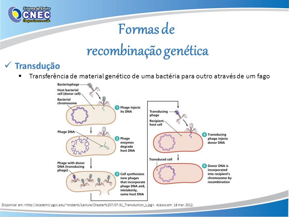 Formas de recombinação genética Disponível em:. Acesso em: 18 mar. 2012. Transdução Transferência de material genético de uma bactéria para outro atra