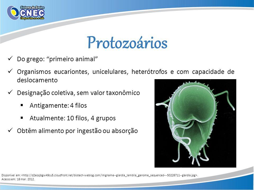 Protozoários Do grego: primeiro animal Organismos eucariontes, unicelulares, heterótrofos e com capacidade de deslocamento Designação coletiva, sem va