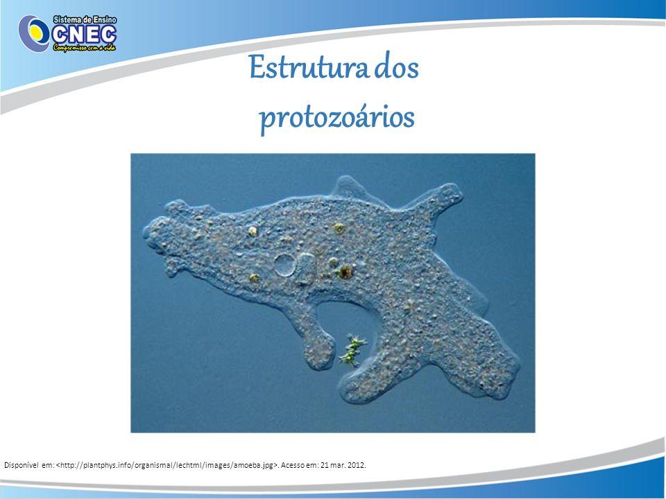 Estrutura dos protozoários Disponível em:. Acesso em: 21 mar. 2012.