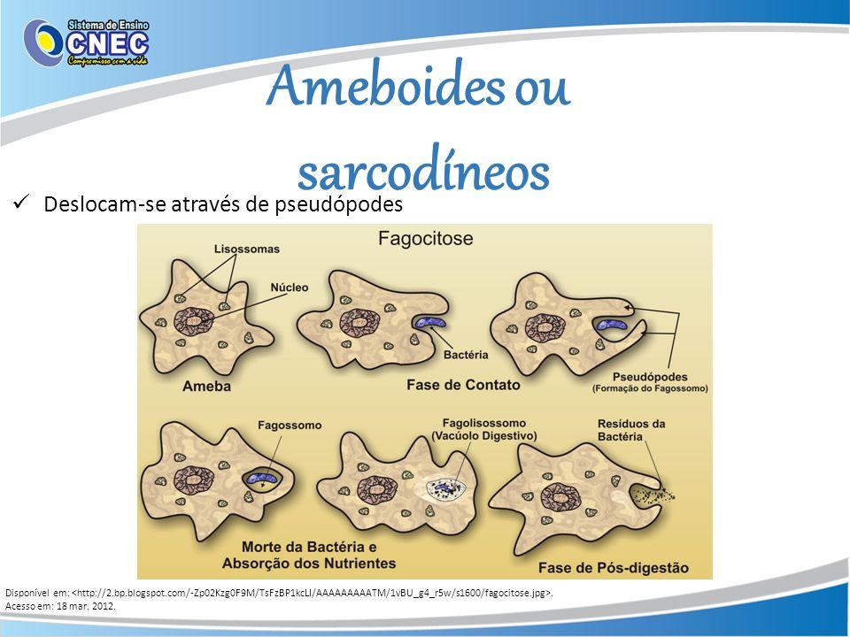 Ameboides ou sarcodíneos Disponível em:. Acesso em: 18 mar. 2012. Deslocam-se através de pseudópodes