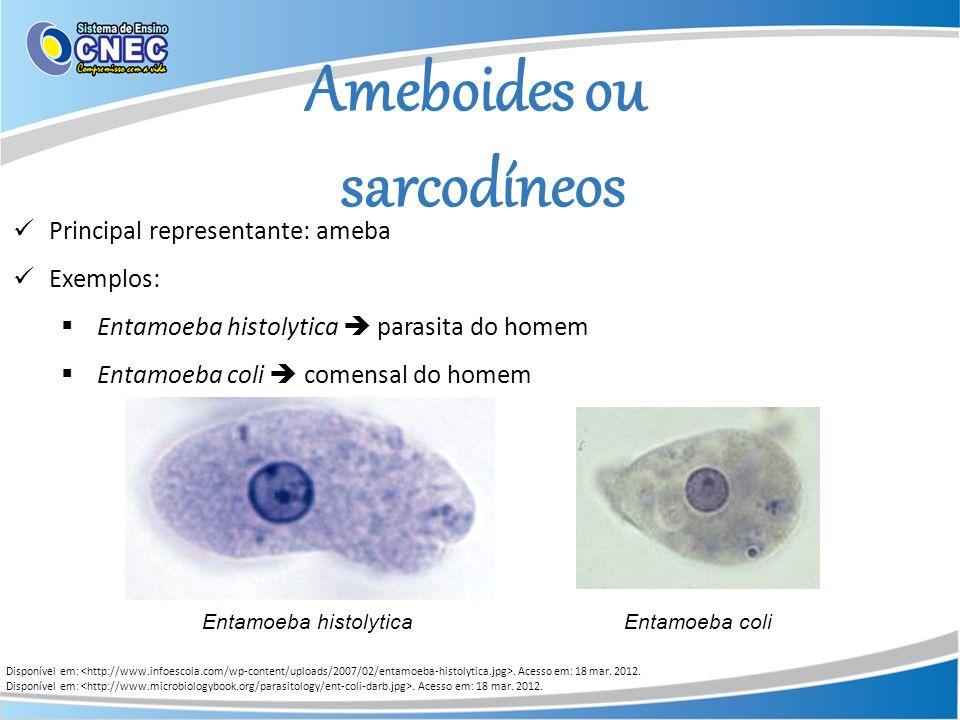 Ameboides ou sarcodíneos Disponível em:. Acesso em: 18 mar. 2012. Principal representante: ameba Exemplos: Entamoeba histolytica parasita do homem Ent