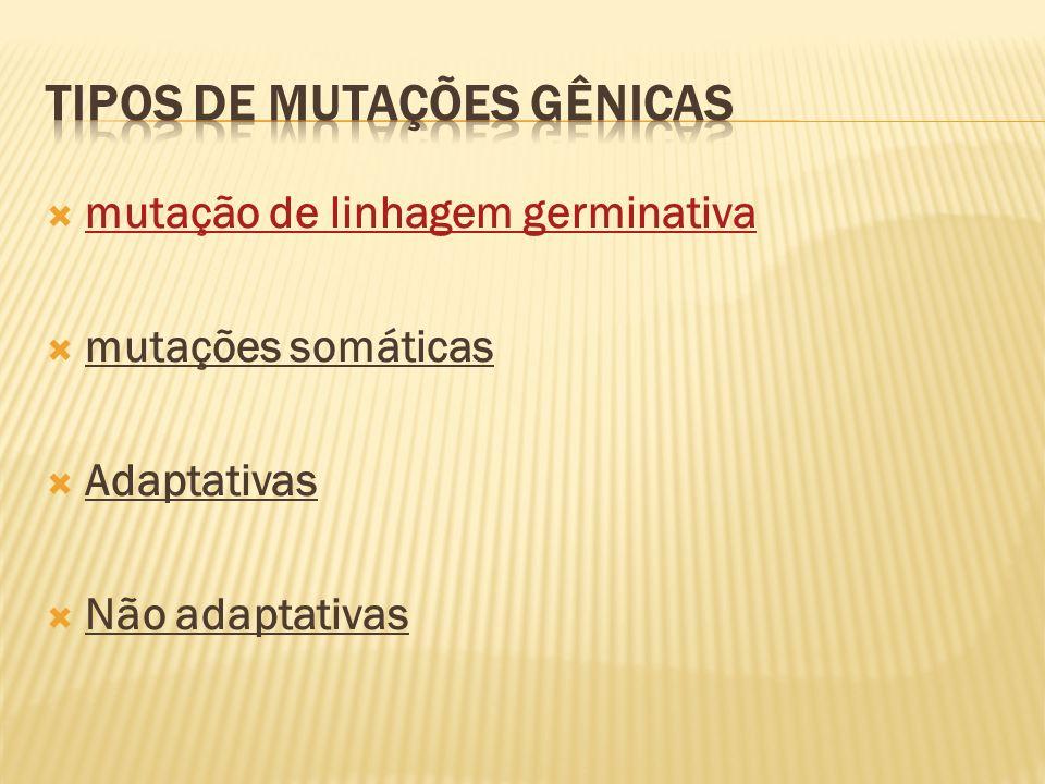 mutação de linhagem germinativa mutações somáticas Adaptativas Não adaptativas