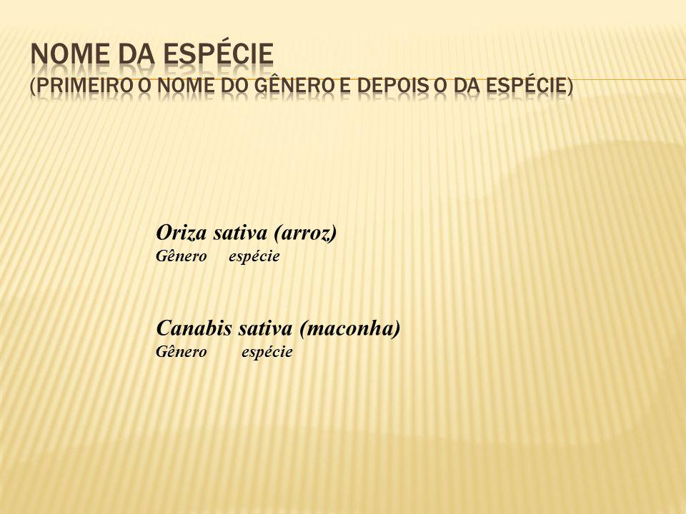 Oriza sativa (arroz) Gênero espécie Canabis sativa (maconha) Gênero espécie