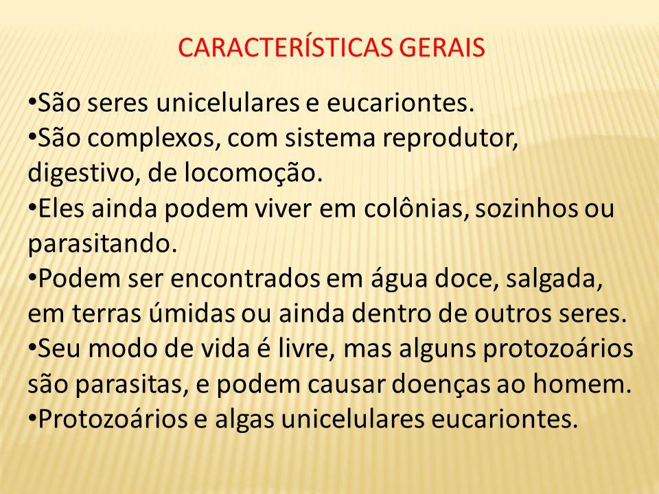 CARACTERÍSTICAS GERAIS São seres unicelulares e eucariontes. São complexos, com sistema reprodutor, digestivo, de locomoção. Eles ainda podem viver em
