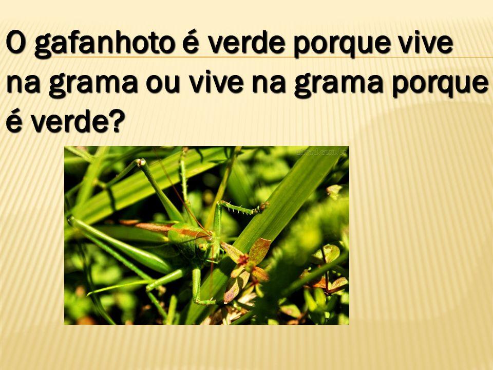 O gafanhoto é verde porque vive na grama ou vive na grama porque é verde?