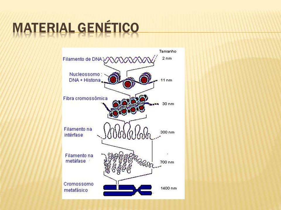 Agente causador: E.Histolytica Hospedeiro definitivo: homem Local do parasitismo: intestino grosso.