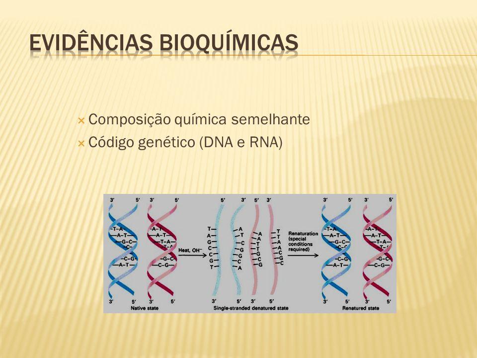 Composição química semelhante Código genético (DNA e RNA)