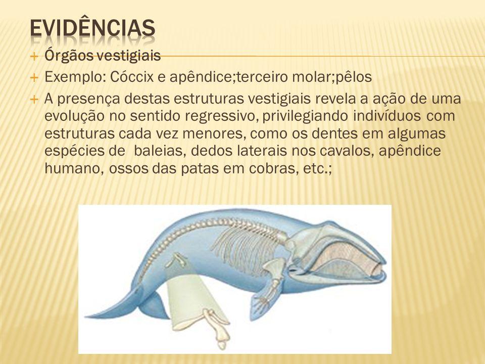 Órgãos vestigiais Exemplo: Cóccix e apêndice;terceiro molar;pêlos A presença destas estruturas vestigiais revela a ação de uma evolução no sentido reg