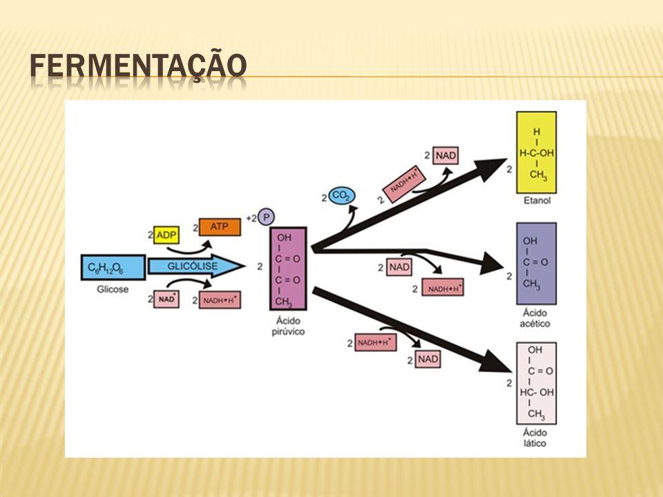 são mudanças na sequência dos nucleotídeos do material genético de um organismonucleotídeosmaterial genético