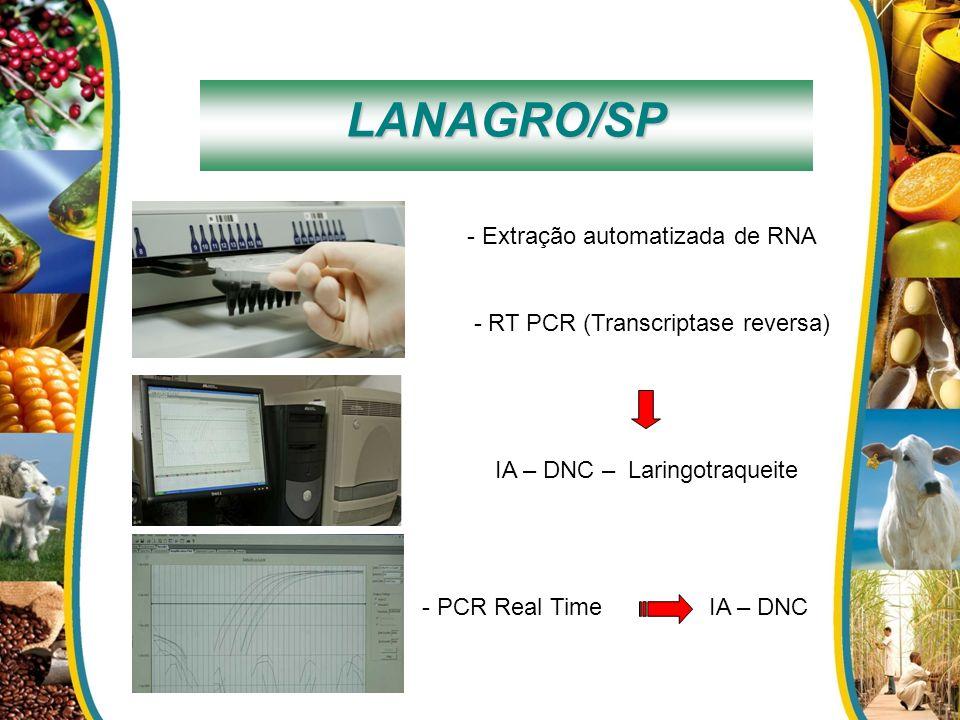 LANAGRO/SP - Extração automatizada de RNA - RT PCR (Transcriptase reversa) IA – DNC – Laringotraqueite - PCR Real TimeIA – DNC