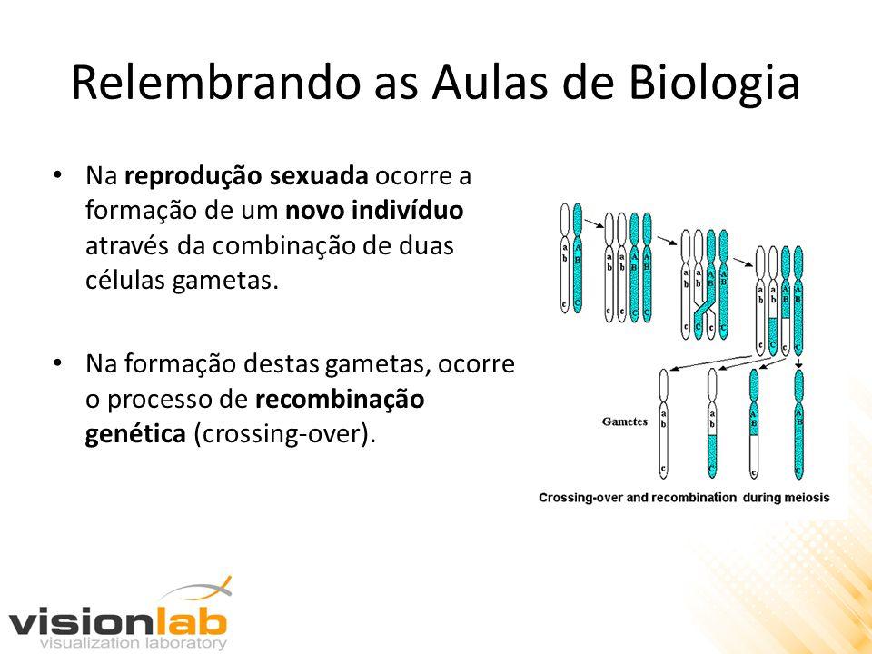 Relembrando as Aulas de Biologia Na reprodução sexuada ocorre a formação de um novo indivíduo através da combinação de duas células gametas. Na formaç