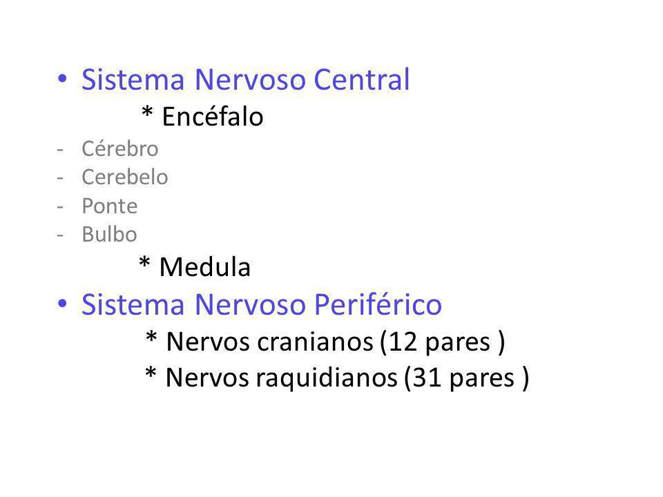 Sistema Nervoso Central * Encéfalo -Cérebro -Cerebelo -Ponte -Bulbo * Medula Sistema Nervoso Periférico * Nervos cranianos (12 pares ) * Nervos raquidianos (31 pares )
