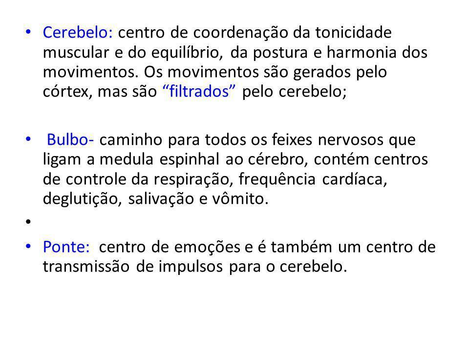 Cerebelo: centro de coordenação da tonicidade muscular e do equilíbrio, da postura e harmonia dos movimentos.