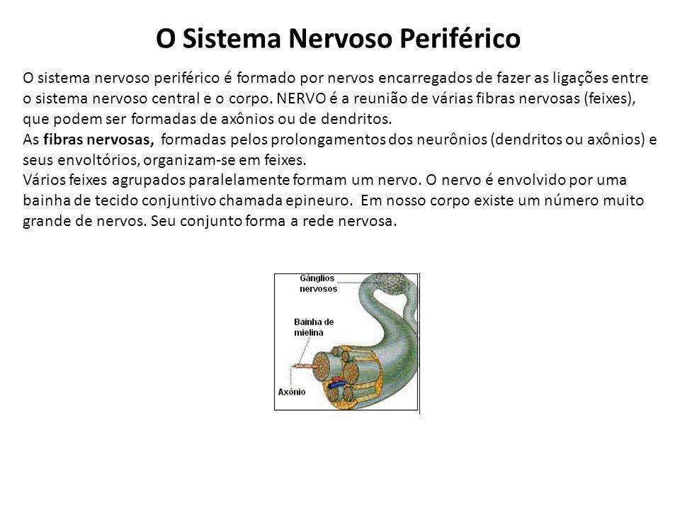 O Sistema Nervoso Periférico O sistema nervoso periférico é formado por nervos encarregados de fazer as ligações entre o sistema nervoso central e o corpo.