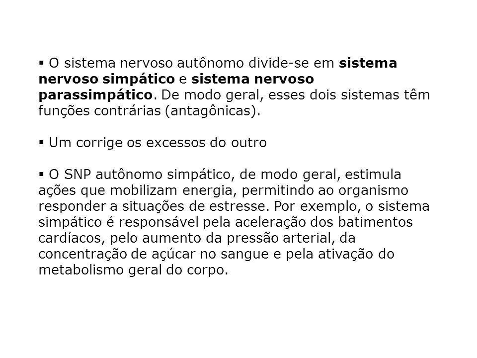 O sistema nervoso autônomo divide-se em sistema nervoso simpático e sistema nervoso parassimpático.