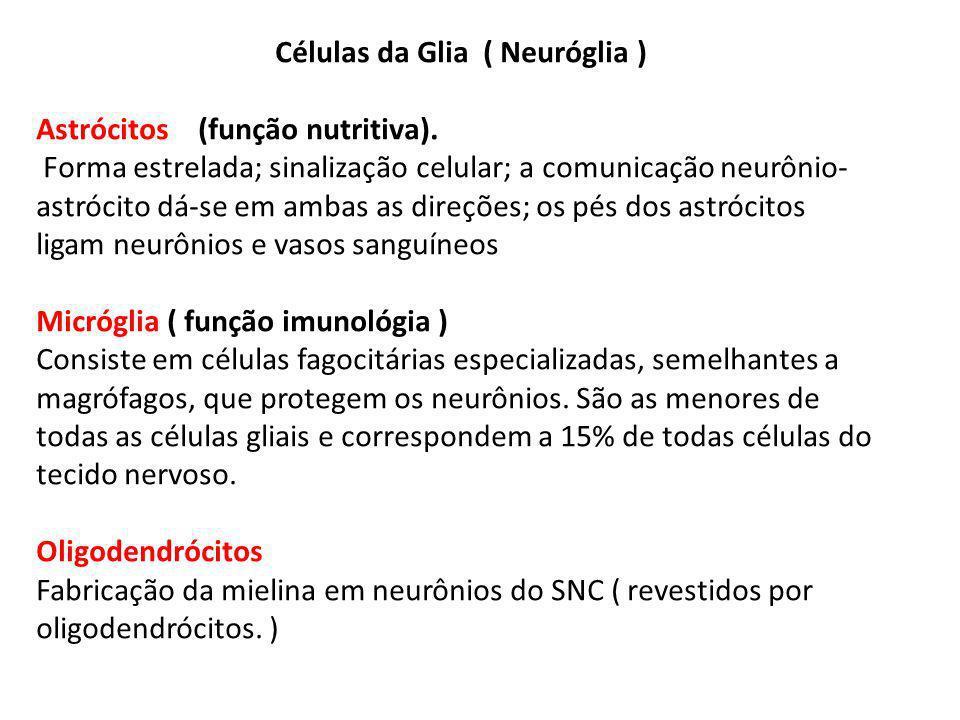 Células da Glia ( Neuróglia ) Astrócitos (função nutritiva).