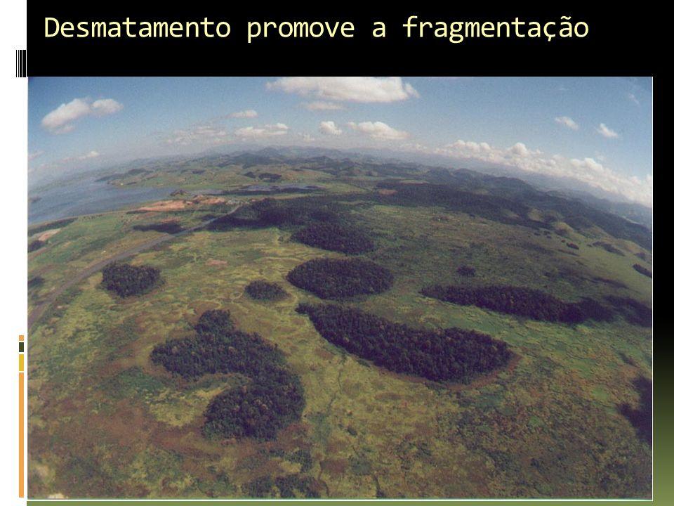 Desmatamento promove a fragmentação