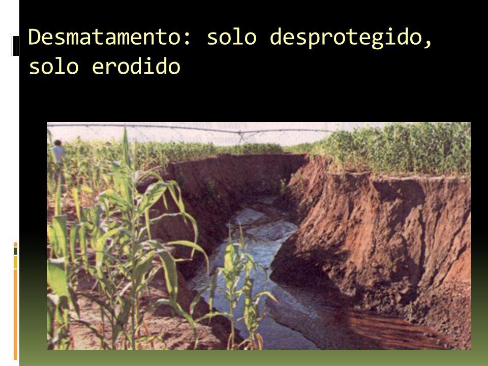 Desmatamento: solo desprotegido, solo erodido