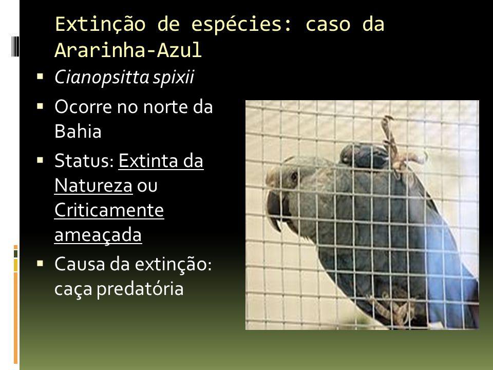 Extinção de espécies: caso da Ararinha-Azul Cianopsitta spixii Ocorre no norte da Bahia Status: Extinta da Natureza ou Criticamente ameaçada Causa da