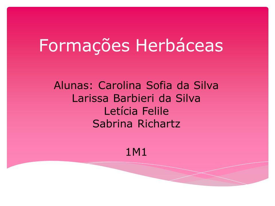 Formações Herbáceas Alunas: Carolina Sofia da Silva Larissa Barbieri da Silva Letícia Felile Sabrina Richartz 1M1
