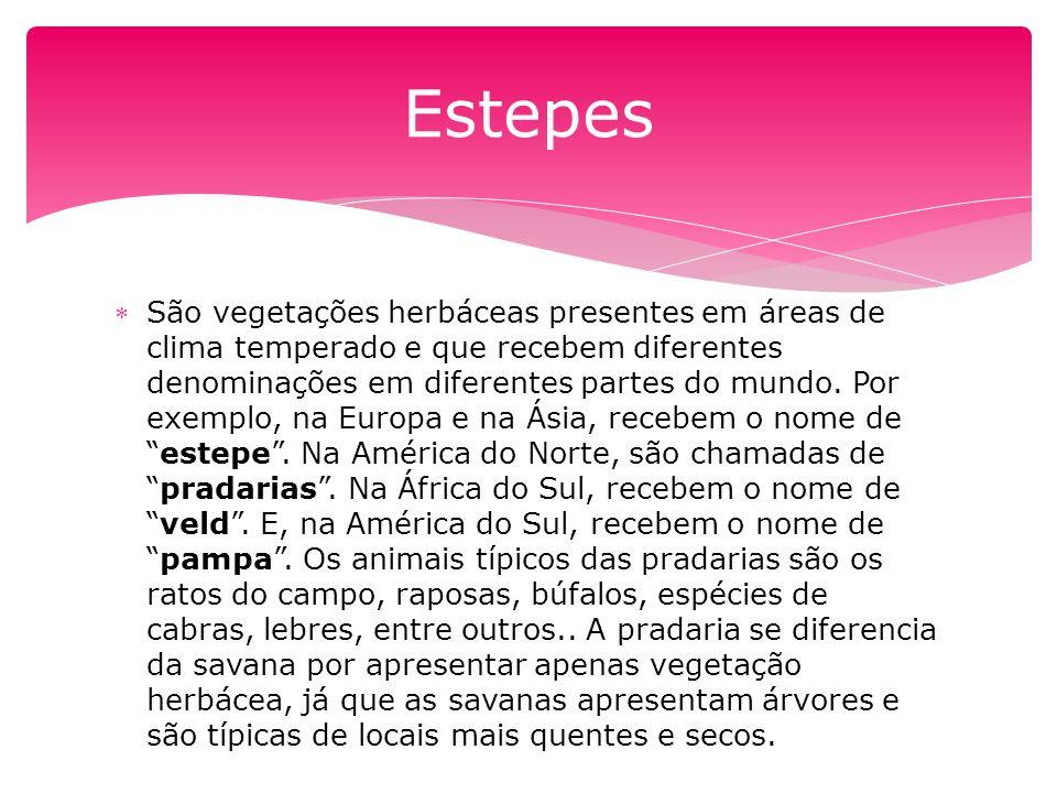São vegetações herbáceas presentes em áreas de clima temperado e que recebem diferentes denominações em diferentes partes do mundo.