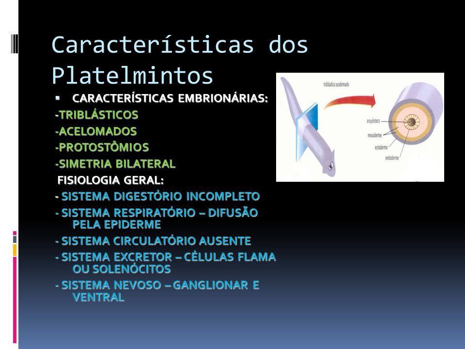 Características dos Platelmintos CARACTERÍSTICAS EMBRIONÁRIAS: CARACTERÍSTICAS EMBRIONÁRIAS: -TRIBLÁSTICOS -ACELOMADOS-PROTOSTÔMIOS -SIMETRIA BILATERA