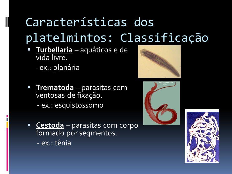 Características dos platelmintos: Classificação Turbellaria – aquáticos e de vida livre. - ex.: planária Trematoda – parasitas com ventosas de fixação