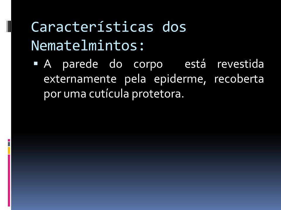 Características dos Nematelmintos: A parede do corpo está revestida externamente pela epiderme, recoberta por uma cutícula protetora.