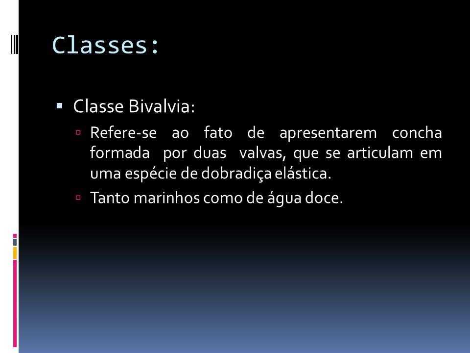 Classe Scaphopoda