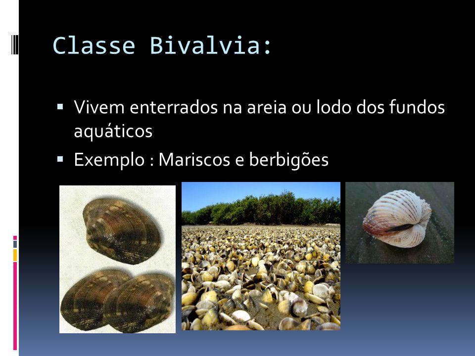 Classe Bivalvia: Vivem grudadas a rochas e a outros substratos submersos.
