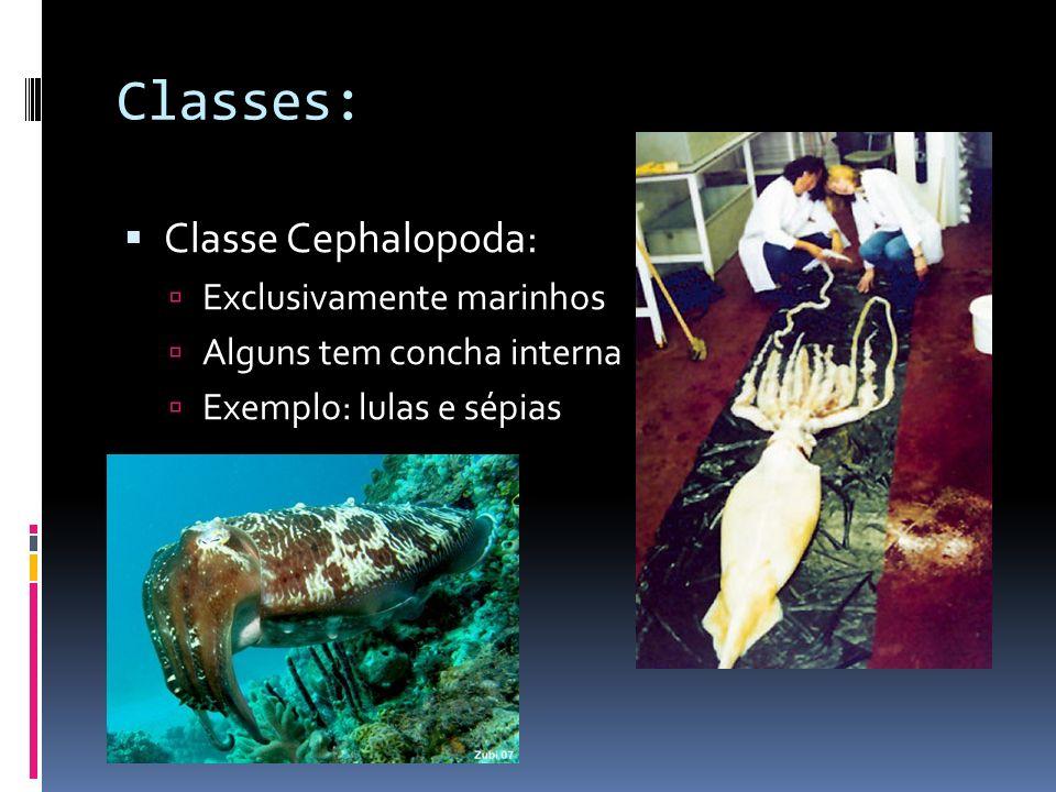Classe Gastrópoda: Pé - bem desenvolvido e utilizado para locomoção.