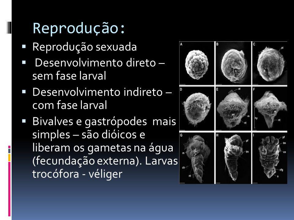 Sistema sensorial: Toque e pressão Bivalves - olhos que não formam imagens Gastrópode e Cefalópodes – olhos bem desenvolvidos (formam imagens)