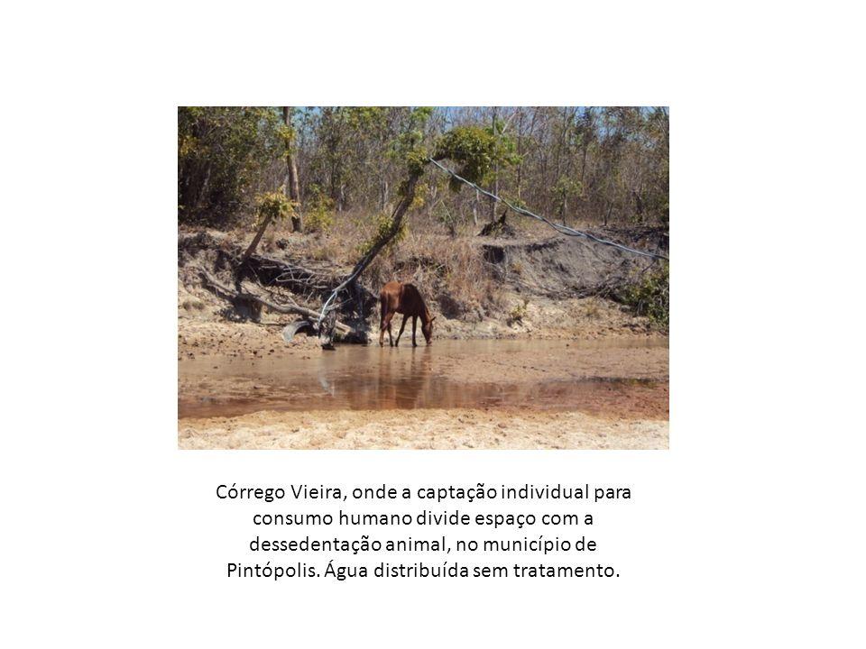 Córrego Vieira, onde a captação individual para consumo humano divide espaço com a dessedentação animal, no município de Pintópolis. Água distribuída