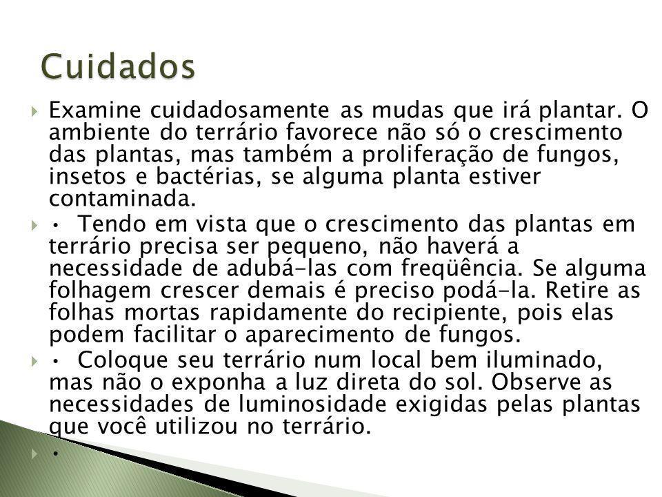 Examine cuidadosamente as mudas que irá plantar. O ambiente do terrário favorece não só o crescimento das plantas, mas também a proliferação de fungos
