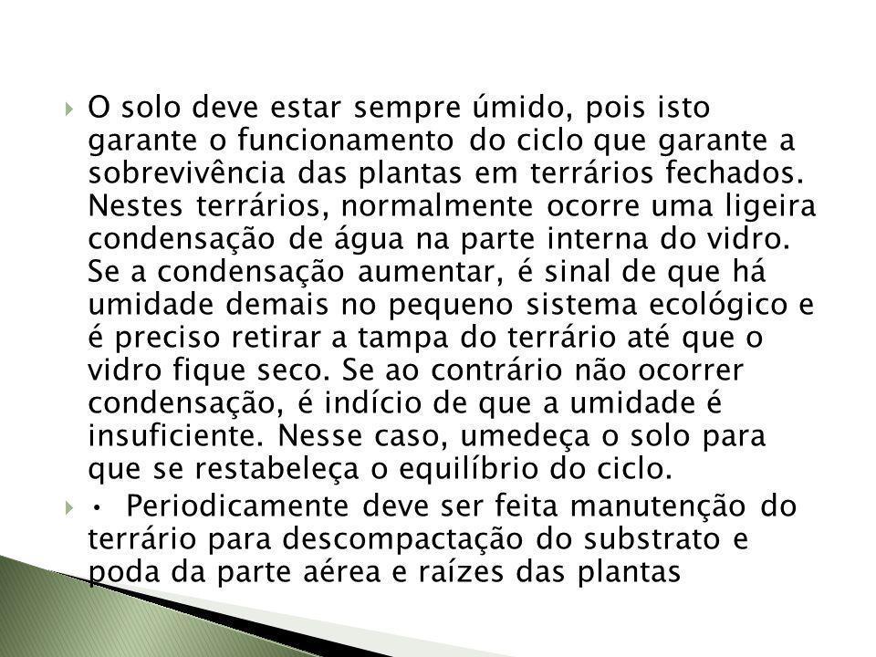 O solo deve estar sempre úmido, pois isto garante o funcionamento do ciclo que garante a sobrevivência das plantas em terrários fechados. Nestes terrá