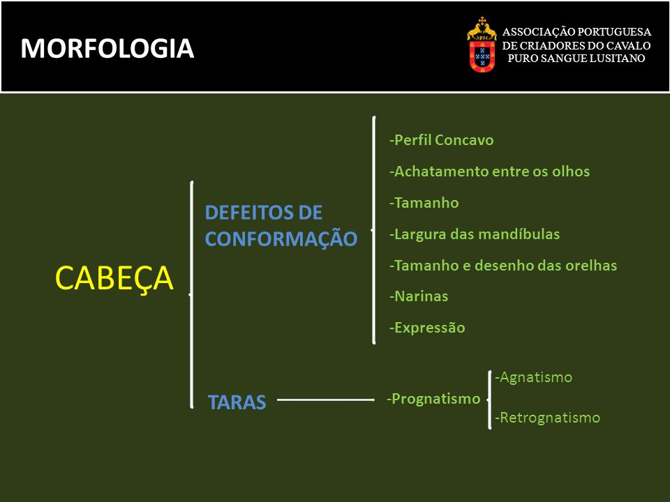 ASSOCIAÇÃO PORTUGUESA DE CRIADORES DO CAVALO PURO SANGUE LUSITANO MORFOLOGIA DEFEITOS DE ADQUIRIDOS MEMBROS POSTERIORES -Agriões -Alifafes -Ovas articulres -Ovas tendinosas e ligamentares -Sobrepés -Esparavões -Curvaças