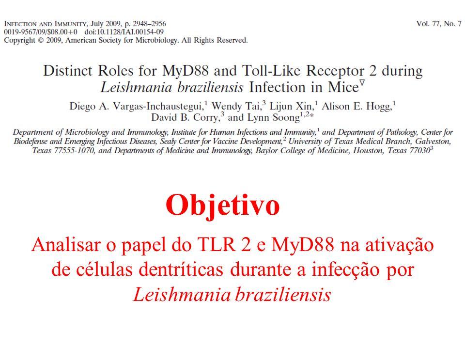 Analisar o papel do TLR 2 e MyD88 na ativação de células dentríticas durante a infecção por Leishmania braziliensis Objetivo
