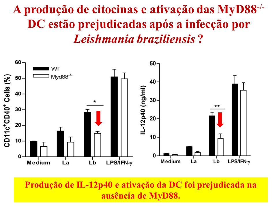 A produção de citocinas e ativação das MyD88 -/- DC estão prejudicadas após a infecção por Leishmania braziliensis .