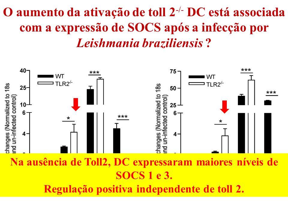 Na ausência de Toll2, DC expressaram maiores níveis de SOCS 1 e 3.