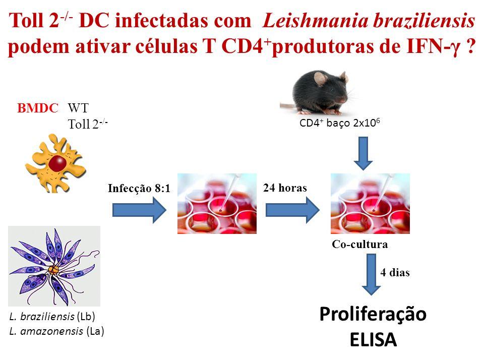 Toll 2 -/- DC infectadas com Leishmania braziliensis podem ativar células T CD4 + produtoras de IFN-γ .
