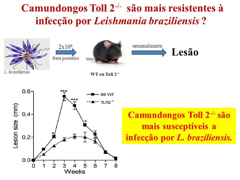 WT ou Toll 2 -/- 2x10 6 Pata posterior L.