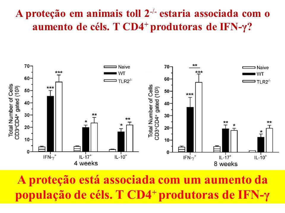 A proteção está associada com um aumento da população de céls. T CD4 + produtoras de IFN-γ